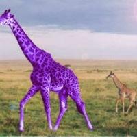 MagicGiraffe