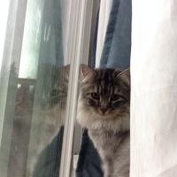 Alaskalex_fml