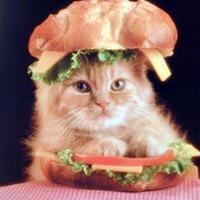KittenSandwich