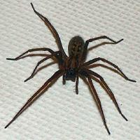 Spider123456789