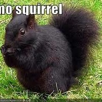 EmoSquirrel