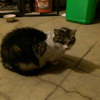 j_cat187