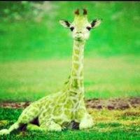 giraffeegreen