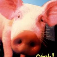 Fail_Pig