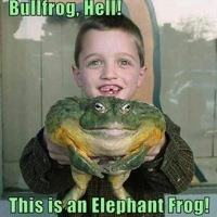 RetardedBullFrog