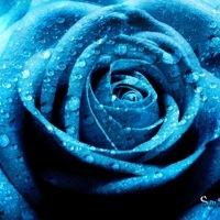 blue2012