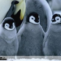 Penguin21