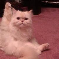 kittytub