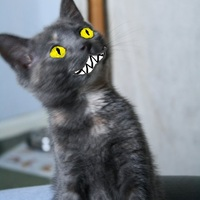 kittykaos