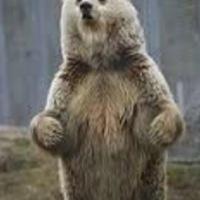 a_random_bear