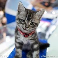 Mioko_fml