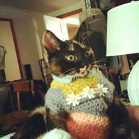 I_Hug_Cats