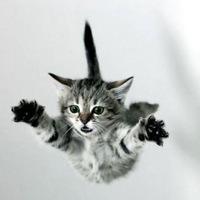 MeowingKat