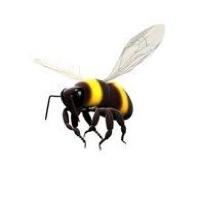 wizzbee