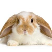 Rabbit26