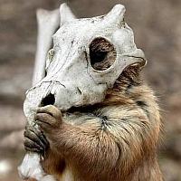 wolvesonparade