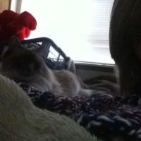 KittySaysMoo