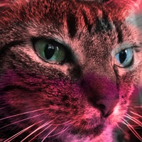 catniss480