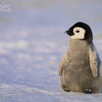 penguinpride