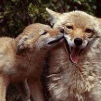 foxxi