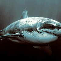 sharklover2017