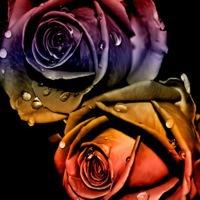 roseygirl2
