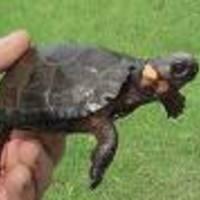 TurtleHabitat