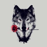 Wolfo06