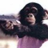 monkeys009