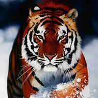Kittiecat511