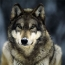 <b>wolf81</b> - the 09/06/2010 at 12:08am