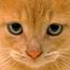 <b>catnip216</b> - the 11/02/2010 at 5:03pm