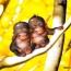 <b>monkey_around</b> - the 05/31/2009 at 11:55pm