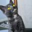 <b>kittykaos</b> - the 02/22/2013 at 3:02pm
