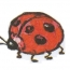 <b>ladybird</b> - the 09/28/2009 at 8:10pm