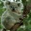 <b>koalaguy</b> - the 07/27/2009 at 5:38am