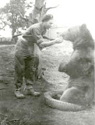 The_Voytek_Bear