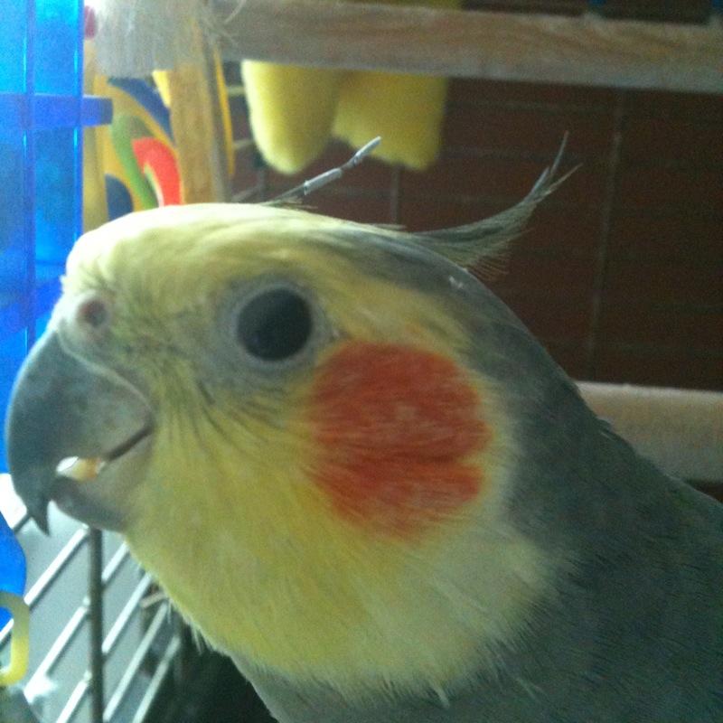 birdboy64