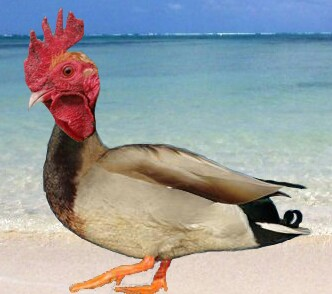Quackadoodledoo