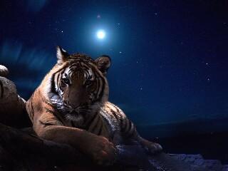 Tigress98