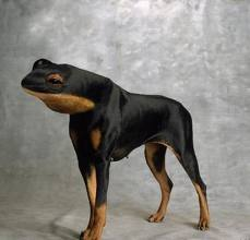 LeFrogDog
