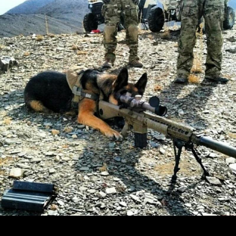 sniperdog6518