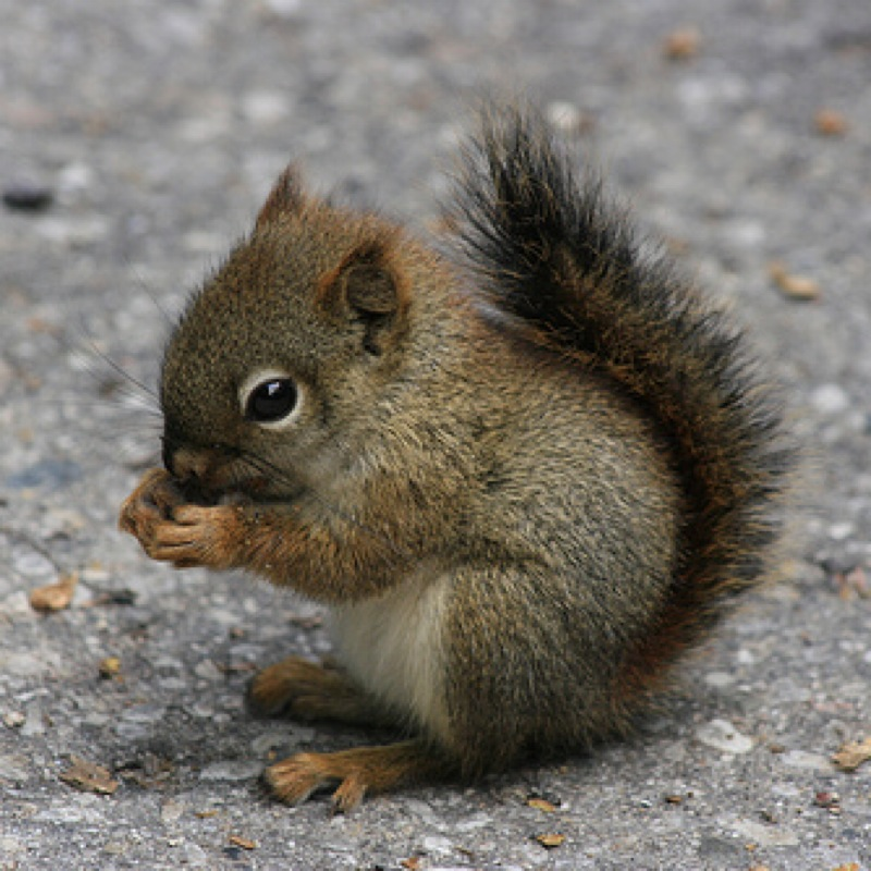 tinysquirrel