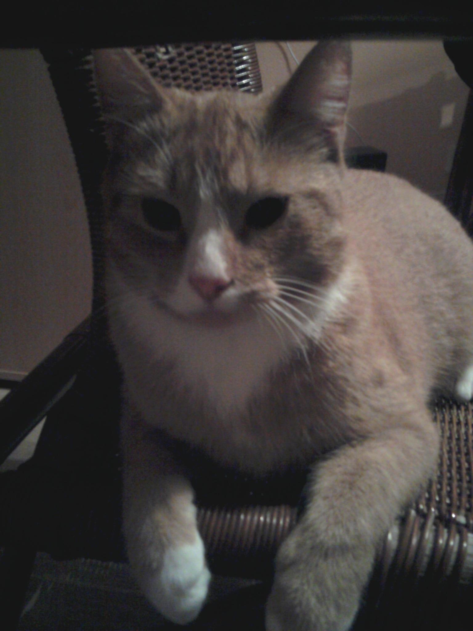 meKittycat