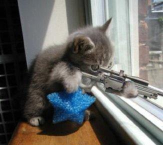 I_Like_Kittys