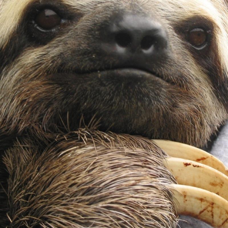 sloth61899