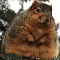 ilovesquirrels