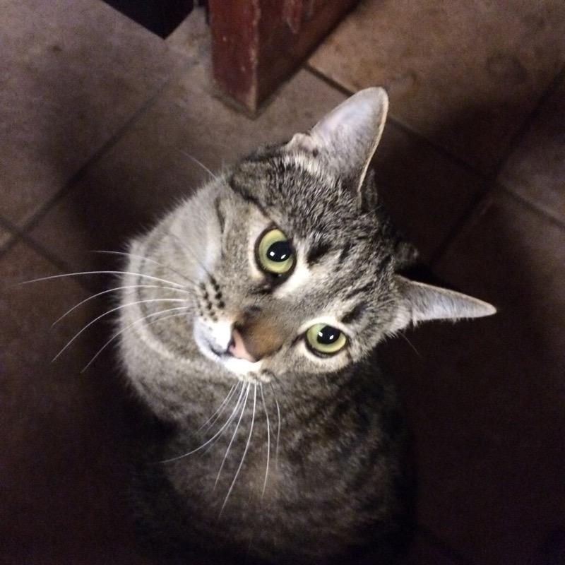 kittykat8770