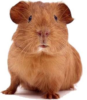 guineagirl96