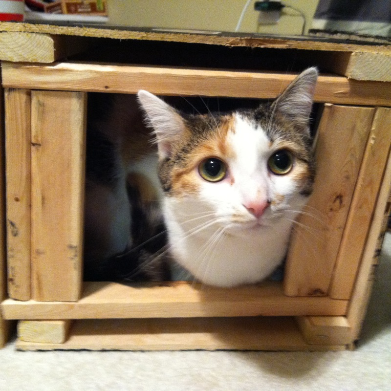 kittycatkittycat